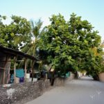 A beautiful sandy street in bodufolhudhoo Maldives Read all abouthellip