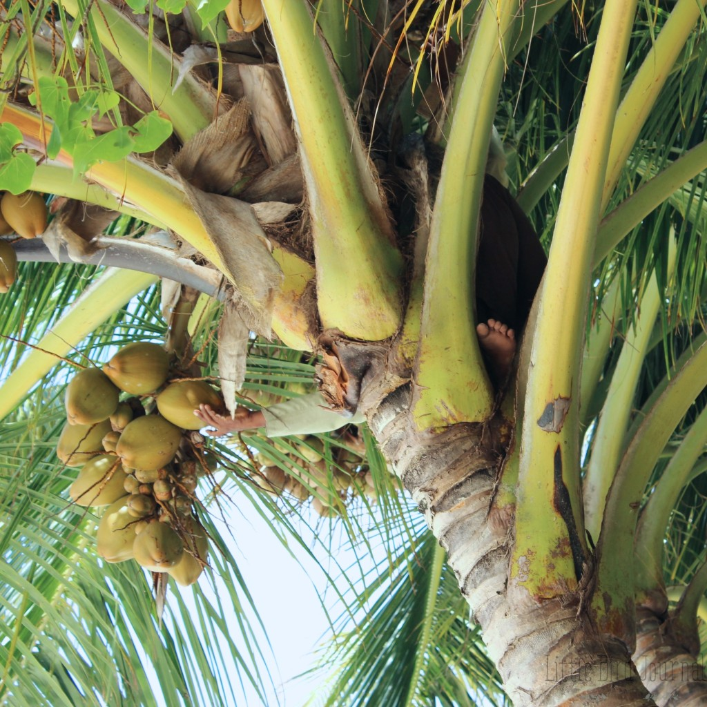 green juice article photos 12