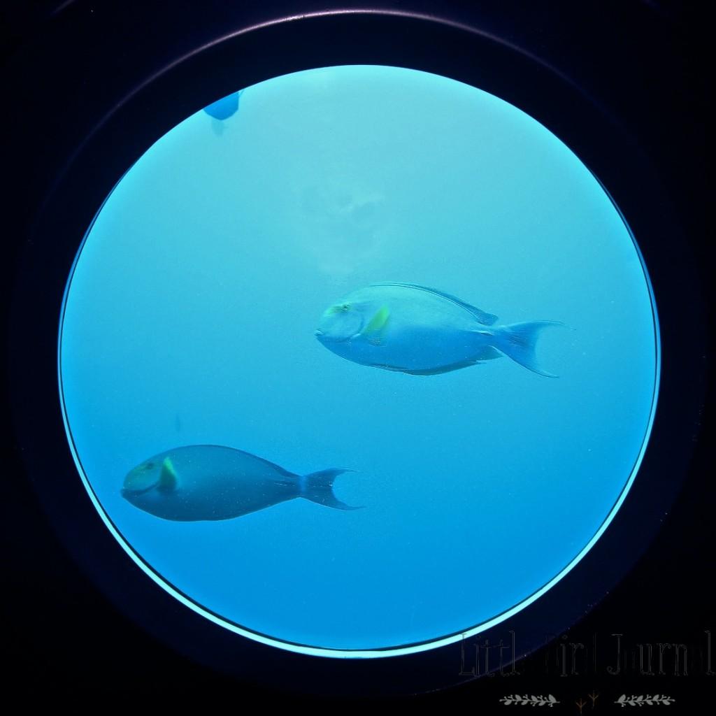 whale submarine 9