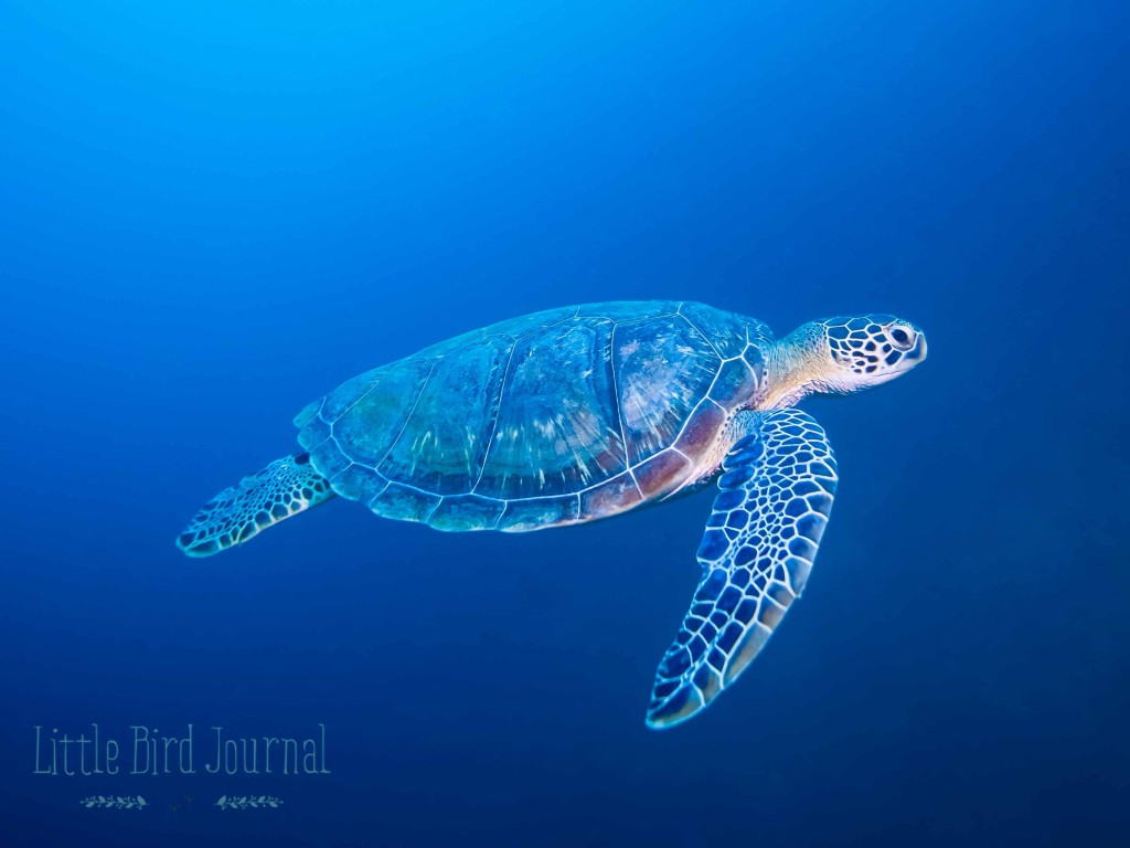 Green-Turtle-artticle-1