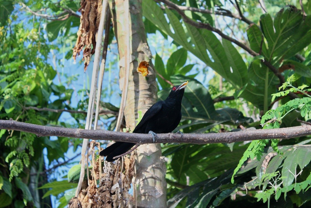 ukulhas little bird journal 2